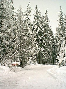 Tall winter trees covered with snow on side of road.